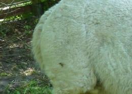 Kompostierung von Alpaka-Mist zur Düngemittelherstellung
